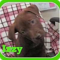 Adopt A Pet :: Izzy - Clear Lake, IA