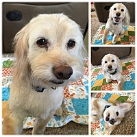 Adopt A Pet :: Lenny - Santa Barbara, CA