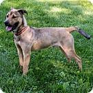 Adopt A Pet :: Eddie