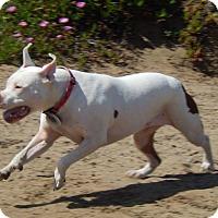 Adopt A Pet :: Coco - San Francisco, CA