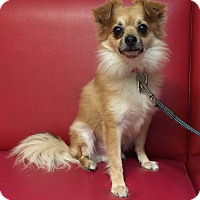 Adopt A Pet :: Alfie - Los Angeles, CA