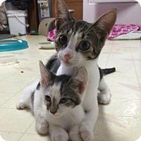 Adopt A Pet :: Mimi - Bensalem, PA