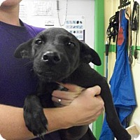 Adopt A Pet :: Oreo - Picayune, MS