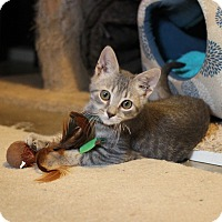 Adopt A Pet :: Flint - Carlisle, PA