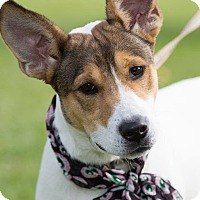 Adopt A Pet :: Jax - Laingsburg, MI