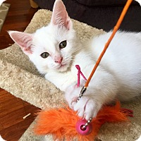 Adopt A Pet :: Donnatella - Southington, CT