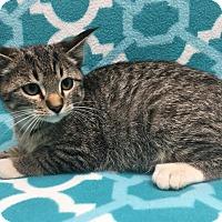 Adopt A Pet :: RAYDON - Watauga, TX