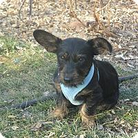 Adopt A Pet :: Pablo - Denver, CO