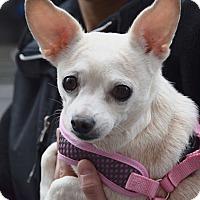 Adopt A Pet :: Magnolia! - New York, NY