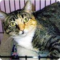 Adopt A Pet :: Kahlua - Medway, MA