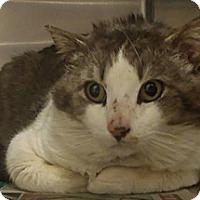 Adopt A Pet :: Skyler - Edmonton, AB