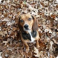 Adopt A Pet :: Sadie - Muskegon, MI