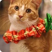 Adopt A Pet :: Eenie - Sacramento, CA