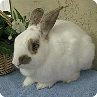 Adopt A Pet :: Ringo - Bonita, CA