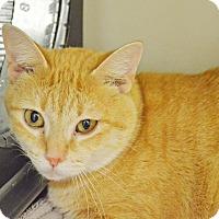 Adopt A Pet :: Jenny - Lincoln, NE