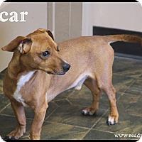 Adopt A Pet :: Oscar - Rockwall, TX