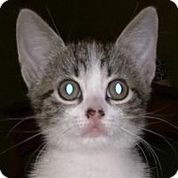 Adopt A Pet :: Cece A - Orlando, FL