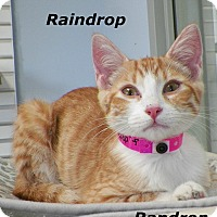 Adopt A Pet :: Raindrop - Dover, OH