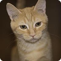 Adopt A Pet :: Scarlett TG - Schertz, TX
