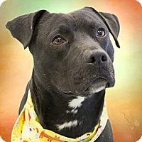 Adopt A Pet :: Poseidon - Cincinnati, OH
