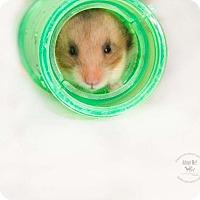 Adopt A Pet :: Eevee - Alexandria, VA