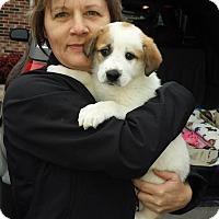 Adopt A Pet :: Mr. Angie~ meet me! - Glastonbury, CT