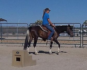 Mustang for adoption in Phelan, California - Molly