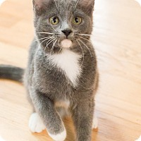 Adopt A Pet :: Oher - Chicago, IL