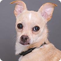 Adopt A Pet :: Ron Ron - Sudbury, MA