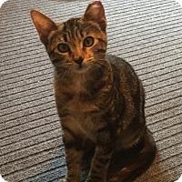 Adopt A Pet :: Riga - Colorado Springs, CO
