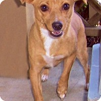 Adopt A Pet :: Rue - Warner Robins, GA