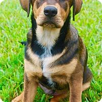 Adopt A Pet :: Magellin - Houston, TX
