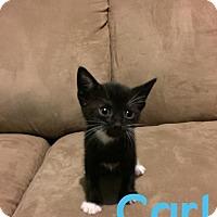 Adopt A Pet :: Carl - Orlando, FL