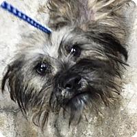 Adopt A Pet :: Hula-hoop - Oswego, IL
