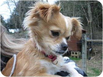 Dog Adoption Manchester Tn