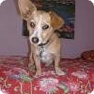 Adopt A Pet :: Rosie