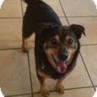 Adopt A Pet :: Gunner - Justin, TX