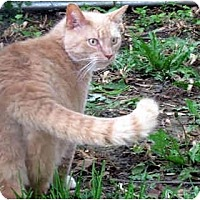 Adopt A Pet :: Tommy - Xenia, OH