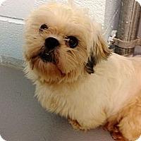 Adopt A Pet :: Abner - Muskegon, MI