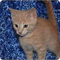 Adopt A Pet :: Courage - Colmar, PA