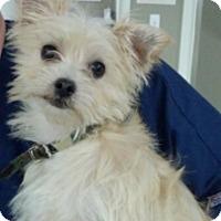Adopt A Pet :: Zipper - Russellville, KY