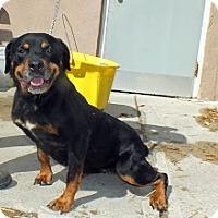 Adopt A Pet :: Fiona - Tinton Falls, NJ