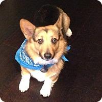 Adopt A Pet :: Rocco - Lomita, CA