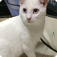Adopt A Pet :: Sundae - Philadelphia, PA