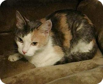 Huntley Cat Rescue