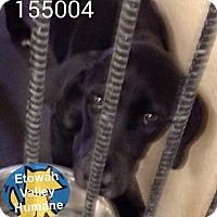 Adopt A Pet :: Mary-Kate - Boston, MA