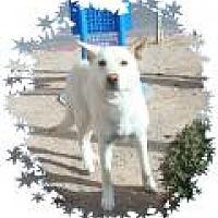 Adopt A Pet :: Polar Bear - Las Vegas, NV