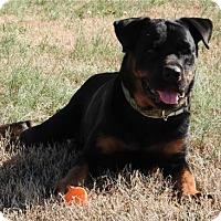 Adopt A Pet :: Maxwell - White Hall, AR
