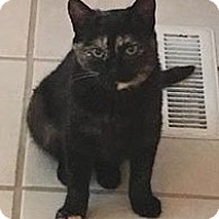 Adopt A Pet :: Charity - Ogallala, NE