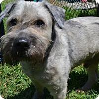 Adopt A Pet :: Ben - Miami, FL
